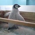 ペンギン大好き♪