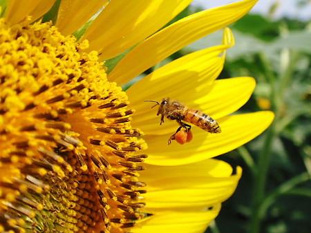花粉だんご大きくなってきたかな?