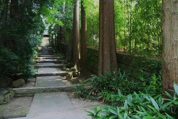 写真: 森林浴♪