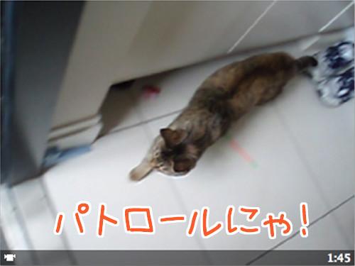 090126-1【猫ムービー】パトロールにゃ!