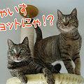 Photos: 090422-にゃいすショットにゃ!?