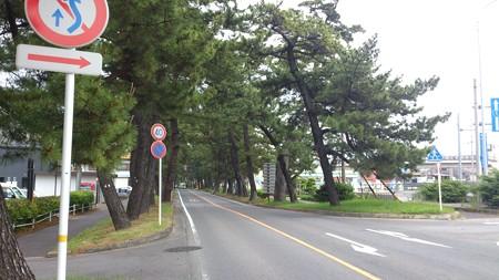 14052007_知立松並木