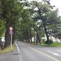 Photos: 14052007_知立松並木