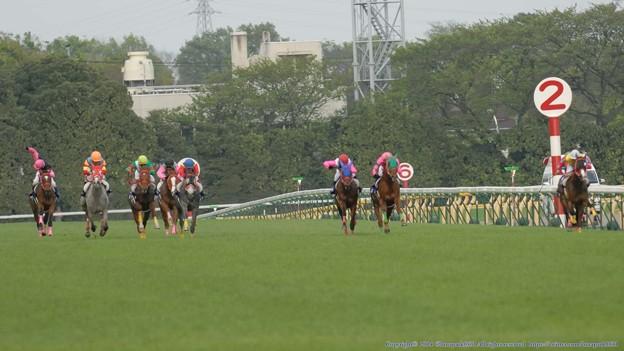 [070422東京13RジョッキーM]200m。坂上から先頭に立った内の河内に3分どころを走る本田と安田が猛然と詰め寄る