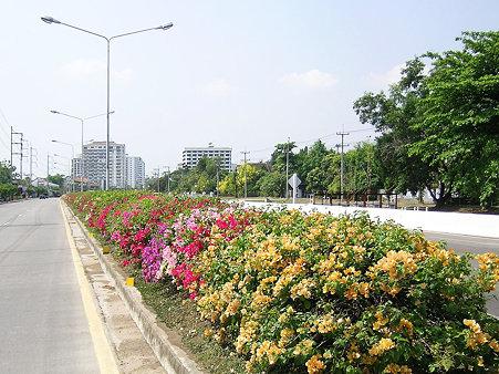花いっぱいのチェンマイ(8) DSCN4892_R