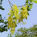 Photos: 花いっぱいのチェンマイ(3) DSCN4869_R(LR)