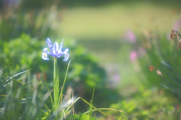 Photos: IMG_9511