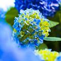 写真: 青に良し。。。