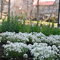 104 中庭花壇2 08年4月27日撮影 by ホテルグリーンプラザ軽井沢