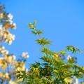 緑か輝く季節が来ました