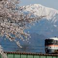 Photos: 春、早朝より。