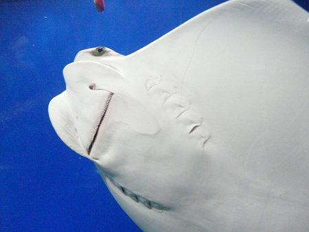 世界最大級の水族館 「海遊館」 1.ずっと見ていたい