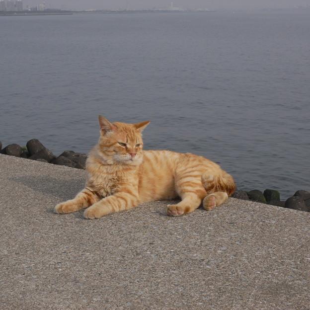 写真: 海の前の猫