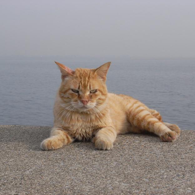 写真: にらむ猫