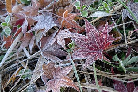 凍える落葉