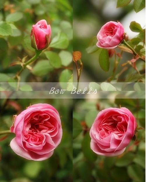 Bow Bells 4cut 14 April 2009 name