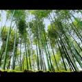竹郡.......