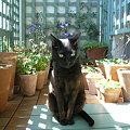 Photos: ガーデンキャット01