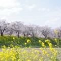 Photos: 早乙女