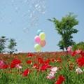 Photos: IMGP3921_0527