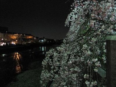 写真: 20140410 高野川 2