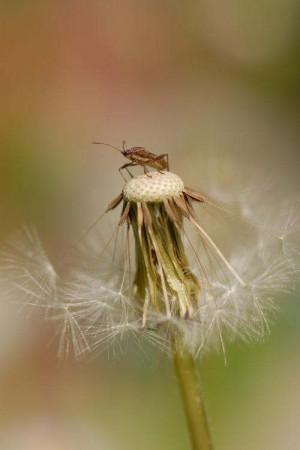 綿帽子と昆虫