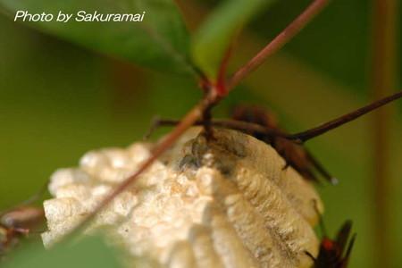 蜂の巣かなぁ?