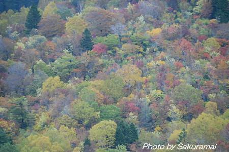 見事な紅葉の絨毯