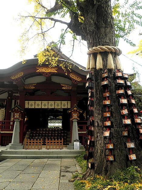素盞雄神社-04飛鳥の杜-天王社の大銀杏(子育ての銀杏)