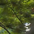 Photos: 緑愁