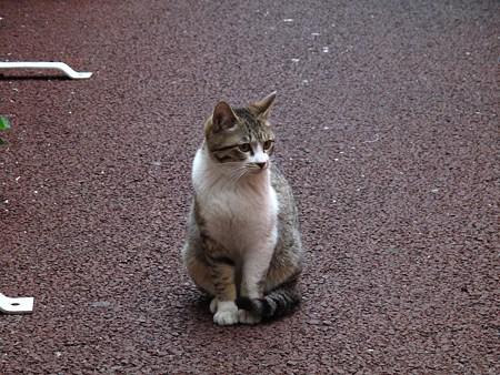 繁華街の野良猫その2