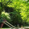 新緑_杉村公園07