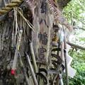 写真: 鎌八幡宮03