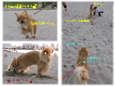 マニちゃん@お台場海浜公園