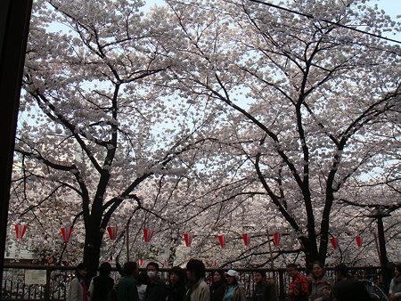 店内からの桜@Dall'orto