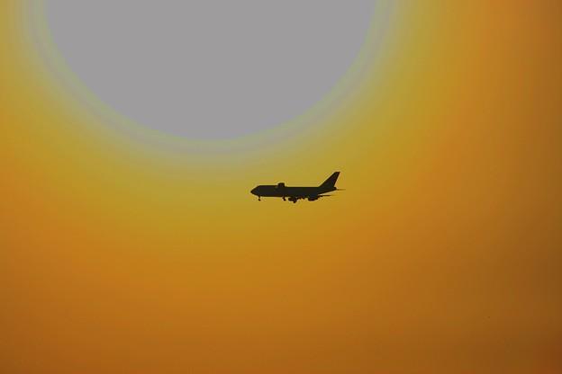 飛行機と大きい夕陽!(@_@;) ハレーション現象