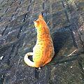 写真: 水門猫さん(K3100777)