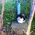 写真: 水門猫さん(K3100928)