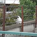 Photos: 水門猫さん(R0010180)