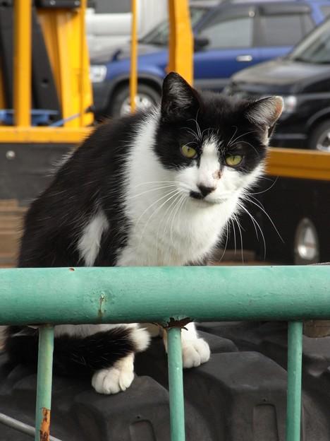 Photos: 水門猫さん(R0012348)