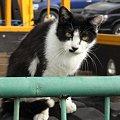 写真: 水門猫さん(R0012348)