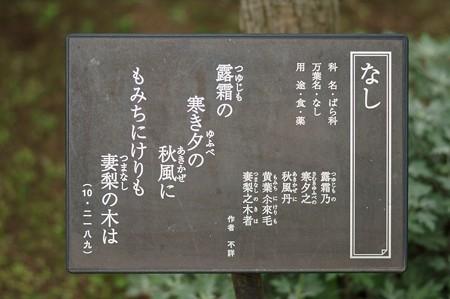 梨(ナシ)