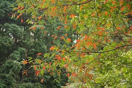 紅葉の季節2