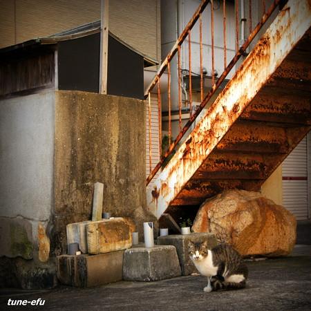 街猫427