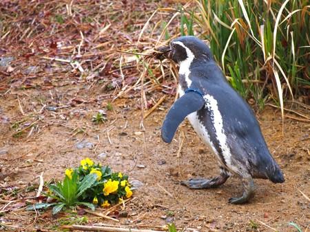 20140330 ペンヒル 雨のペンギンヒルズ04