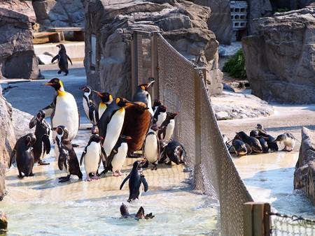 20140426 葛西 ペンギン4種盛り