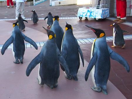 20131207 アドベン ペンギンパレード43