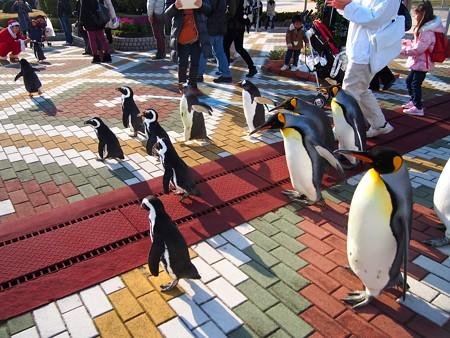 20131207 アドベン ペンギンパレード40