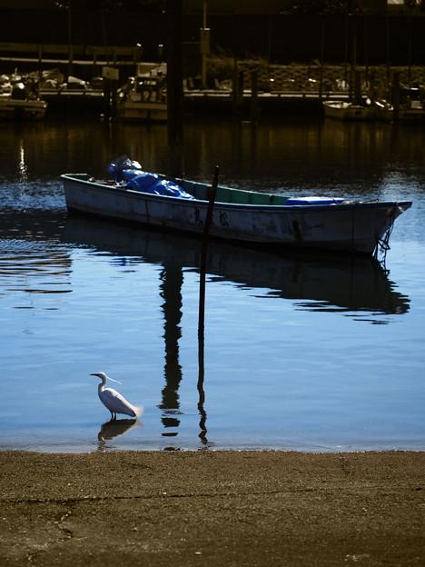 Photos: 3300_サギの停泊