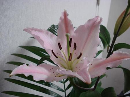 20090503 花2